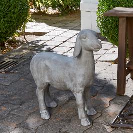 Schaap Mouton