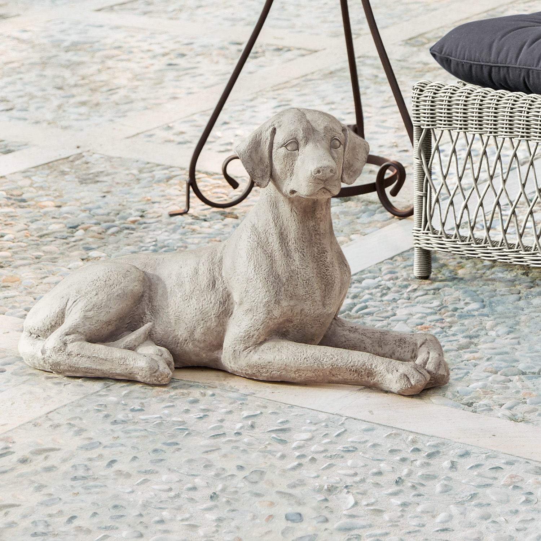 Hond Socrate